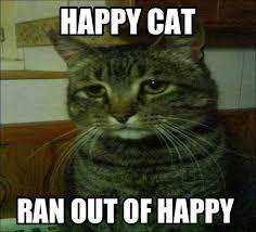 Happy Cat Meme - happy cat not so happy meme guy