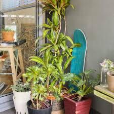 krã uter balkon krã uter pflanzen auf dem balkon haus fassade hause