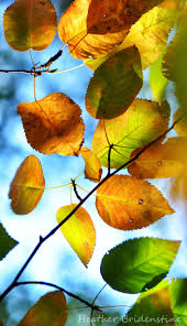 Fall Autumn by 210 Best Autumn Leaves Images On Pinterest Autumn Fall