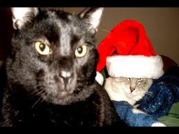 talking kitty cat 24 u0027s christmas