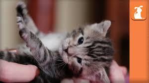 precious baby kitty loves mommy kitten love