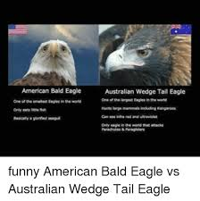 America Eagle Meme - american bald eagle one ofthe smallest eagles in the word