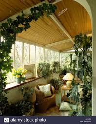 large houseplants large green houseplants and wicker armchair in conservatory
