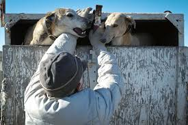dog hunting truck photos inside the controversial sport of coyote coursing u2014 high