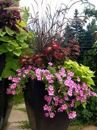 Patio Potato Planters Patio Flowers Full Sun Patio Flowers Pinterest Patios