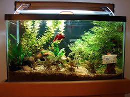 Fish Tank Decoration Ideas Aquatic Fish Tank Decoration Ideas
