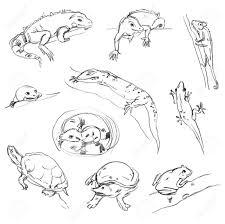 drawn turtle reptile pencil and in color drawn turtle reptile