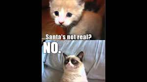 Cute No Meme - grumpy cat part 2 best meme memes cute cats youtube
