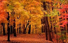 fall colors u2013 fairfax gardening
