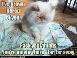 Moving Away Meme - lolcats map lol at funny cat memes funny cat pictures with