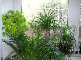 Grose Wohnzimmer Uhren Große Pflanze Im Dunkelen Wohnzimmer Elvenbride Com Große