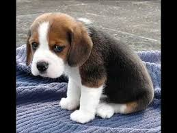 cuddling puppies for gift ideas puppy