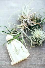 cool wedding favors cool wedding favors for guests mini succulent wedding