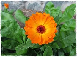 welcome to my bulgaria flowers some interesting facts
