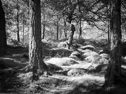 Lady Glen Affric by Glen Affric Cannich Black Isle Douglas Murrayart