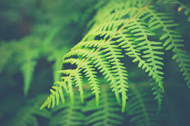 Free Picture Leaf Nature Fern Free Images Tree Nature Branch Leaf Flower Green Biology