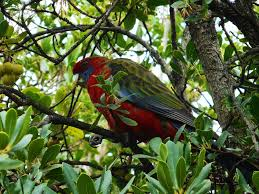native plants canberra top 3 bird watching locations in canberra canberra