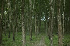 Dominant Plants Of The Tropical Rainforest - ten amazing rainforest plants ecorazzi