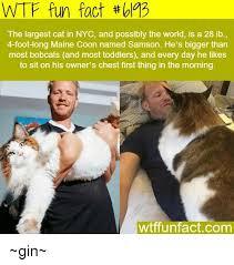 Cat Facts Meme - 25 best memes about meme fun meme fun memes