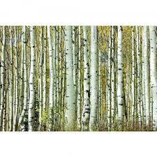tempered glass u0027birch trees u0027 artwork rc willey furniture store
