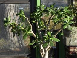 The basics of pruning–What Happens When We Prune a Plant