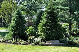 100 privacy trees for backyard backyards beautiful backyard