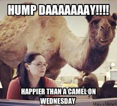 Hump Day Camel Meme - hump day humor caption this the simpsons tapped out addictsall