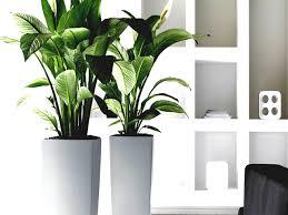 best light for plants lighting low light plants indoor house in boston ma plant vine for