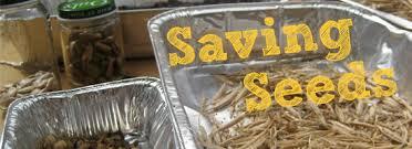 How Do You Spell Backyard How To Save Seeds U2013 The Backyard Farmer Blog Local Harvest