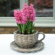 tea cup plant pot 18 unique decoration and willow teacup planter