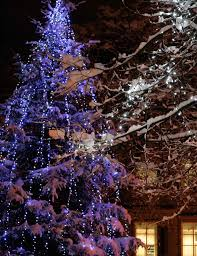 How To String Lights On Outdoor Tree Branches by Christmas Tree Light Ideas Christmas Light Ideas Inspiration
