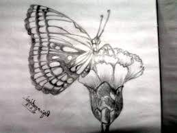 pencil drawing butterfly pencil drawing of butterfly pencil sketch