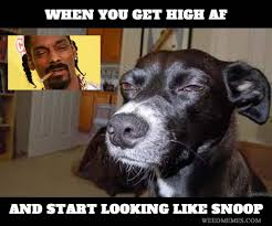 Snoop Meme - high af look like snoop dogg weed memes