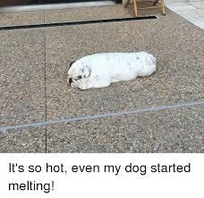 Melting Meme - it s so hot even my dog started melting dogs meme on me me