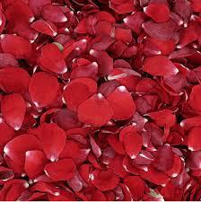 Rose Petals Bridal Red Rose Petals U2013 Rose Petals