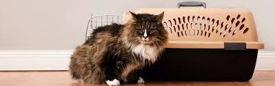 amazon com cat carriers u0026 strollers