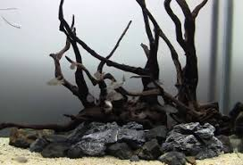 Aquascaping With Driftwood The Plantless Aquarium U2013 The Fish Doctor
