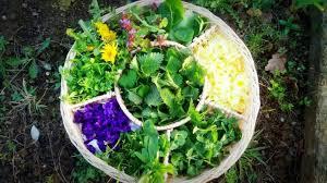 cuisine sauvage stages herboristerie cueillette et cuisine sauvage en mai et juin