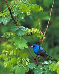 birds nature nhmla