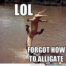 Alligator Meme - go home alligator you re drunk by thjake meme center