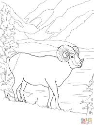 argali mountain sheep coloring free printable coloring pages