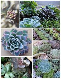 succulent house the glory of succulents ornamentals of distinction house appeal