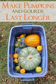 miss kopy kat make your pumpkins last longer