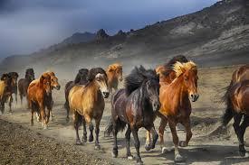 cavalos correndo popular buscando e comprando fornecedores de cavalos correndo em uma estrada de terra kc529 sala home da parede arte moderna decor posters
