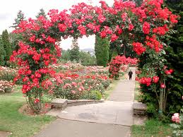 most beautiful rose garden fymhe decorating clear