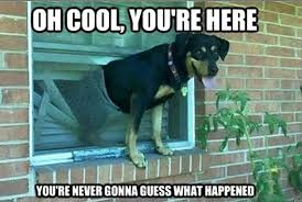 Cool Dog Meme - 50 funniest dog memes of all time