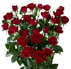 roses wholesale wholesale roses spray choose colors 100 stems