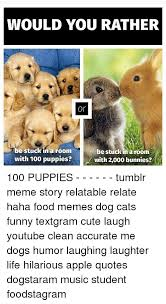 Clean Animal Memes - 25 best memes about dog cat funny dog cat funny memes