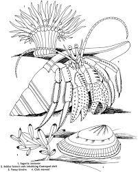 209 best coloring ocean images on pinterest drawings drawing