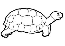 baby turtles clipart black and white